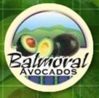 Balmoral Avocados