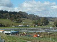 Mount Majura solar farm